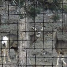 deer-fence-2.jpg